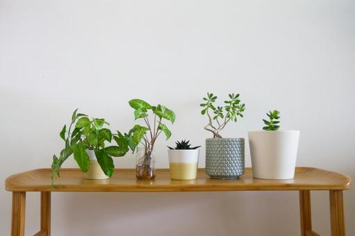 나무 벤치에 늘어선 관엽 식물 1