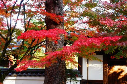 Kyoto Eikando Autumnal Trees and Sunlight