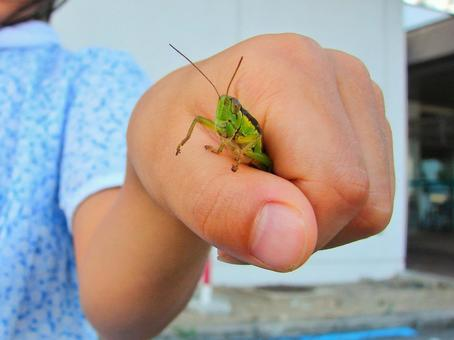 The hand that caught the locust