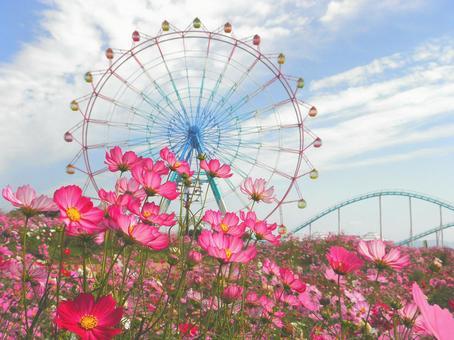 Autumn cherry field and Ferris Wheel 2