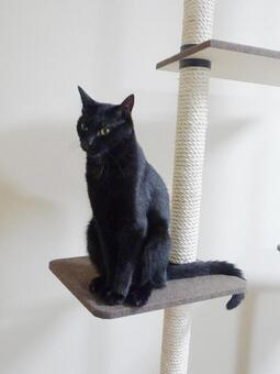 Cat tower and black cat