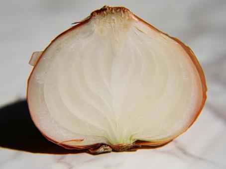 Beautiful onion cross section