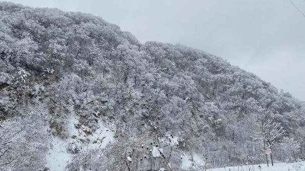 Shiraiwa dyed in a snowy landscape