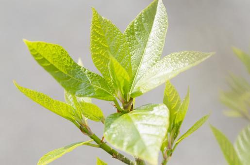 만약 잎 (1)