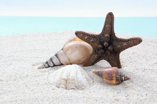 Beach seashell 30