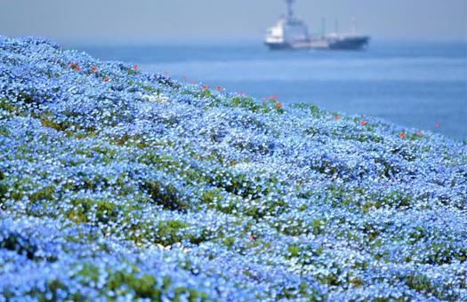푸른 융단 · 네모 피라