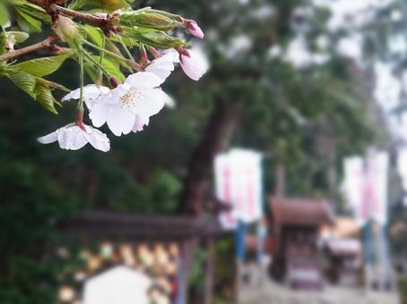 櫻花和神社