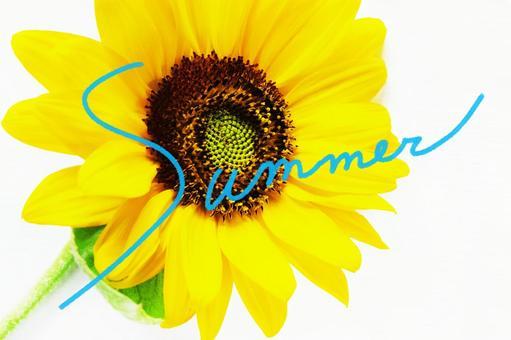 Mini sunflower_white background_Summer
