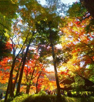In autumn leaves forest