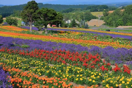 ぜるぶ 언덕 화려한 꽃밭 (피사계 심도 얕은)