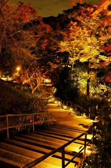 Autumn leaves and illumination in the precincts