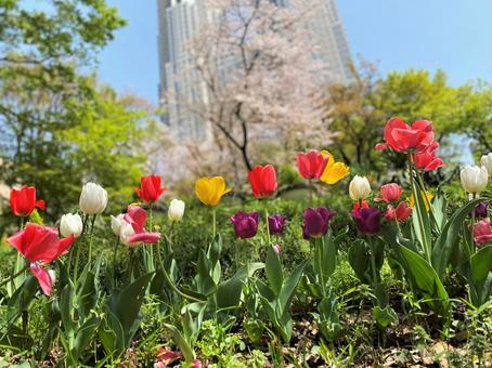 Tulips blooming in the big city