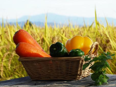 Harvest of carrot and green pepper paprika