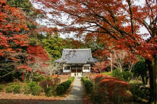 秋葉彩色的龍泉寺在大阪富田森林裡