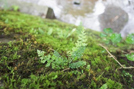 고사리 이끼 녹색