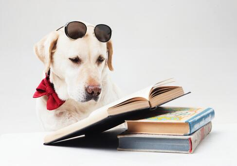Reading Labrador Retriever 2