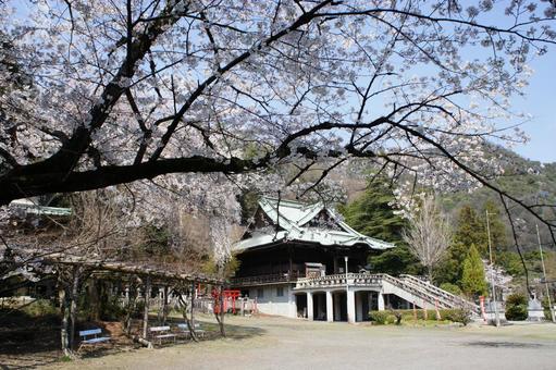 櫻花和帝王寺