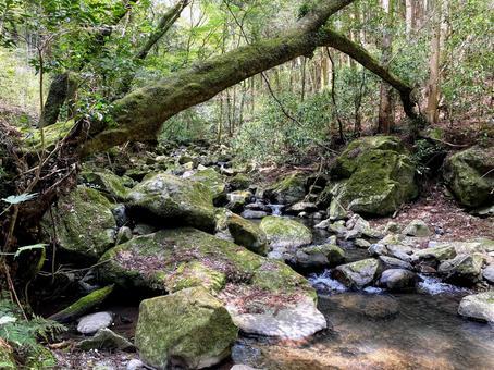 계류 보는 대자연의 힘