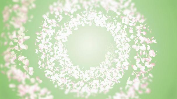 Spring background material where petals rotate and diffuse