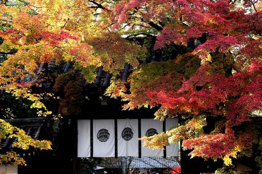 Kyoto Autumn leaves in Kyoto