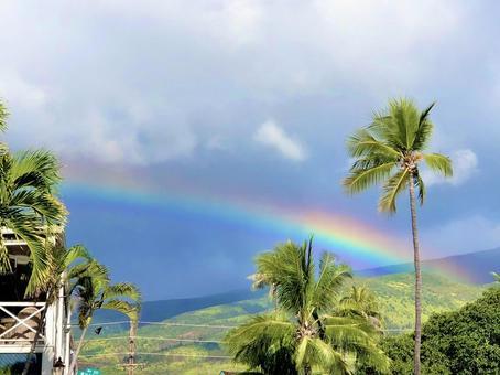 Hawaii Maui Rainbow and Palm Tree