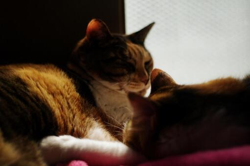 Slumber cat