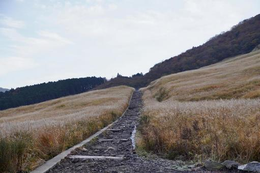 Miscanthus path