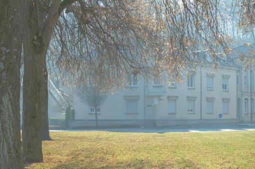 秋天的顏色葉子和2號樓
