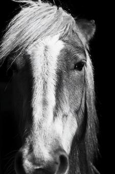 Horse's face 3