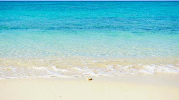 바다와 조개 오키나와의 푸른 바다 바다 배경