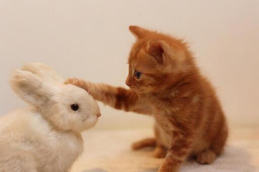 一隻小貓貓撫摸動物