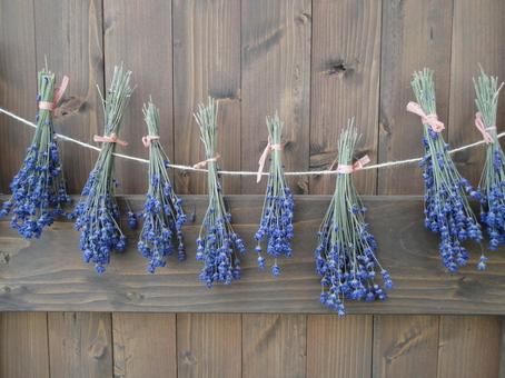Aroma of lavender