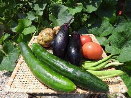 Vegetable 05