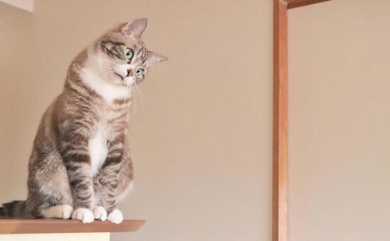 貓貓貓思維貓