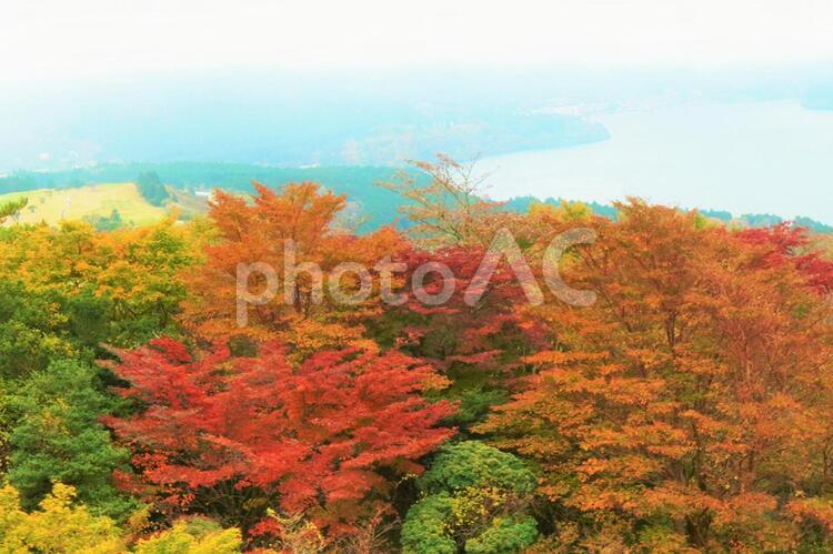 箱根の紅葉(箱根 駒ヶ岳 ロープウェーからの景色)aの写真