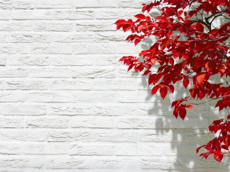 白色的牆壁和秋天的落葉