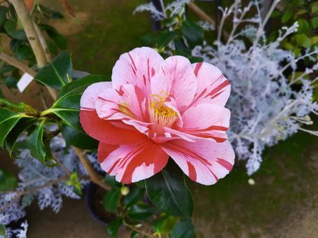 대리석 모양의 꽃