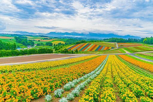 사계 채의 언덕의 전망 꽃밭 (홋카이도 비 에이 쵸)