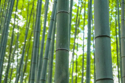 Bamboo grove Kyoto Arashiyama
