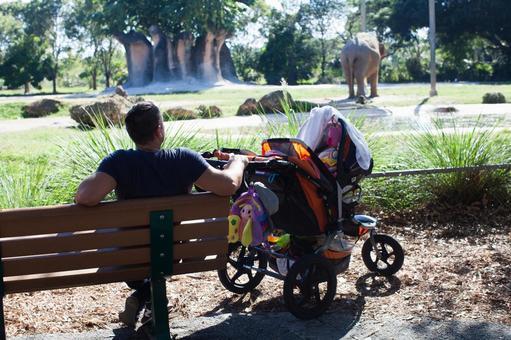 爸爸和婴儿车三看大象在动物园