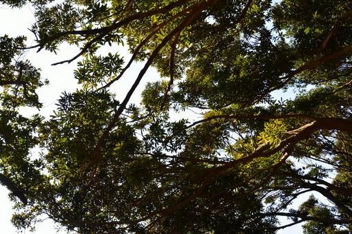 透過樹看到的藍天