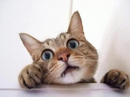 A peeping cat