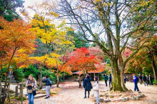 Momijidani Park in Miyajima
