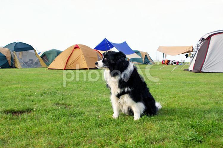 犬とキャンプの写真
