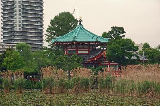 """Walking on Ueno """"Shinobazuke / Kintendo"""" # 5"""