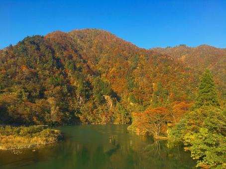 Gokayama autumn leaves