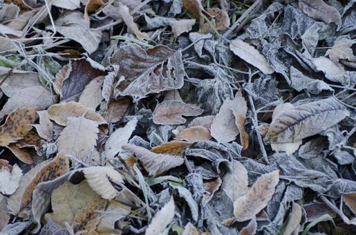 Frozen leaves 3