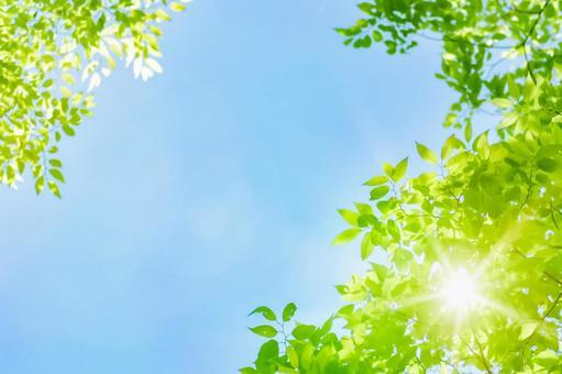 Fresh green sunbeams blue sky light