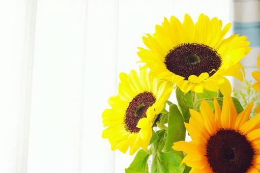向日葵的室內/夏季圖像