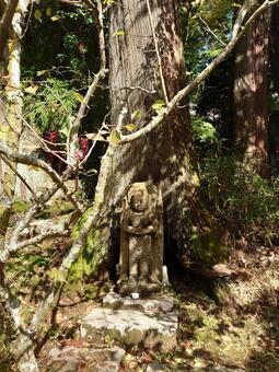 觀音寺附近樹根的佛像